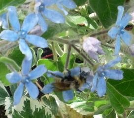 biodiv fl bleue
